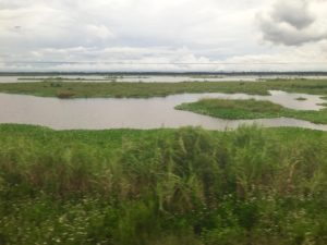 Louisiana landscape from Amtrak train 59